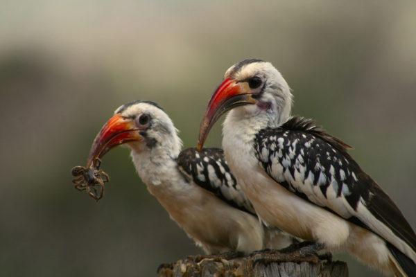 3 Bird list
